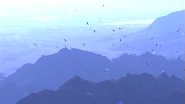 aerial migrating storks, eilat mountains, arava, israel - アラバ砂漠点の映像素材/bロール