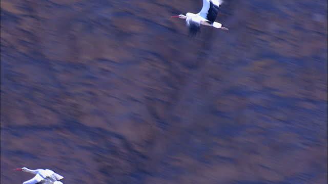 aerial migrating white storks (ciconia ciconia), eilat mountains, arava, israel - アラバ砂漠点の映像素材/bロール
