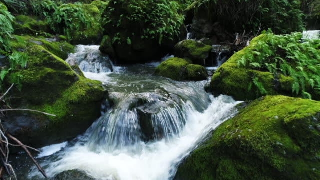 aerial, mossy rocks in cascade canyon river - wyoming stock videos & royalty-free footage