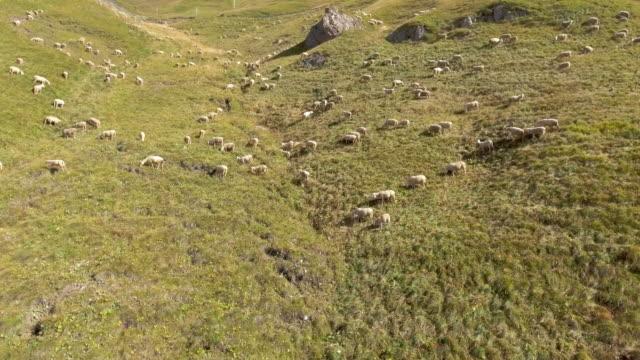 Antenne berg schapenboerderij