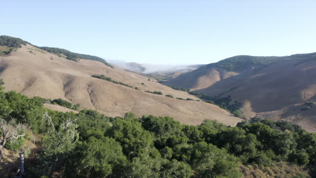 stockvideo's en b-roll-footage met aerial moving forward over trees and dry rolling hills with reflected sunlight and bright blue sky - sierra, california - californian sierra nevada
