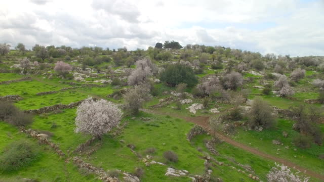aerial /natural mediterranean landscape with spring blossom of almonds and green lush vegetation - blossom stock videos & royalty-free footage