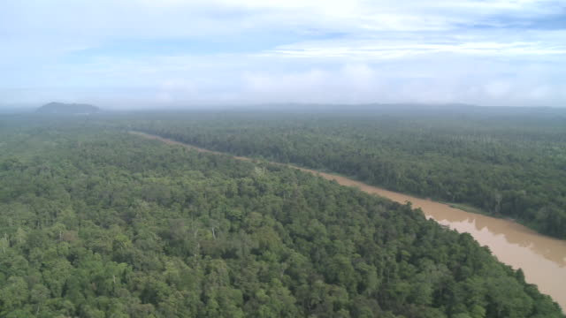Aerial newly planted palm oil plantation, Maliau Basin, Sabah, Malaysia, Borneo