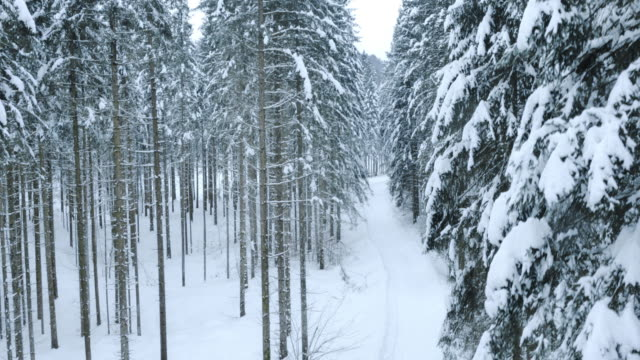 Aerial of a footpath through the snowy forest
