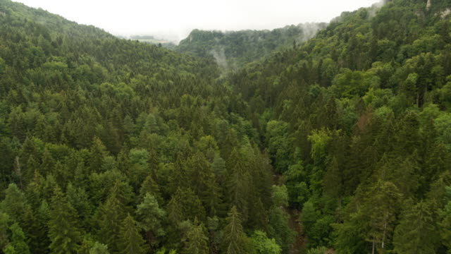 aerial of a forest in germany - 50 seconds or greater stock videos & royalty-free footage