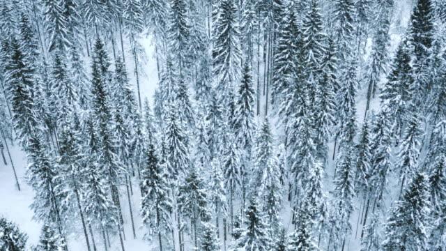 vídeos de stock, filmes e b-roll de vista aérea de uma floresta cobertos de neve - área arborizada