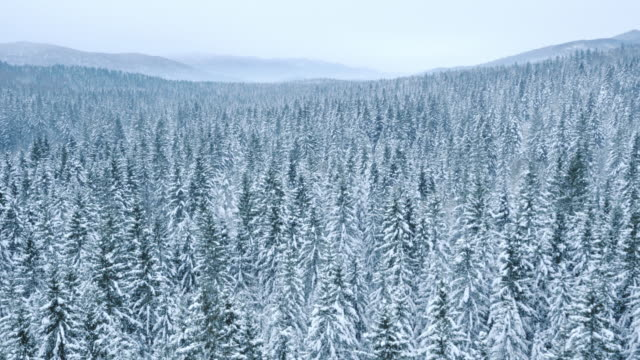 aerial of a vast forest covered with snow - coniferous stock videos & royalty-free footage