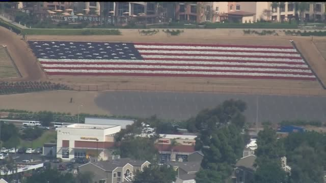 kswb aerial of american flag made up of red white and blue petunias in san diego the flag is measured at 300 x 170 feet it's located at the flowers... - カールズバッド点の映像素材/bロール