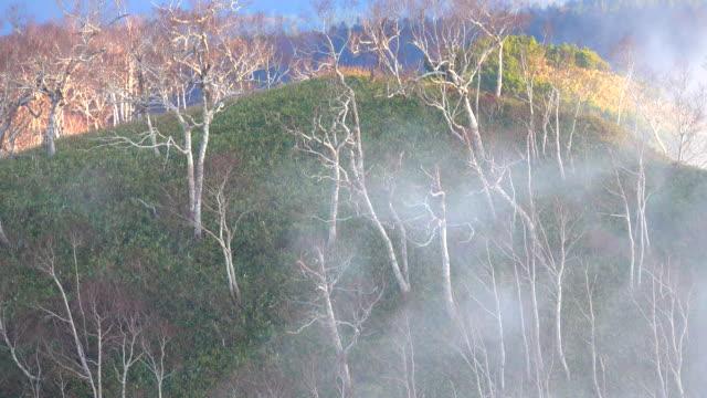 Antenne des herbstlichen Wald mit Wolken.