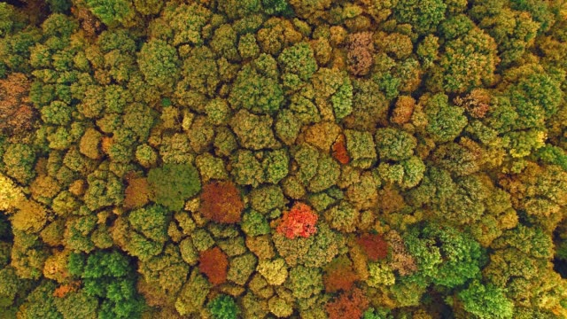 aerial of autumn trees swaying in wind - swaying stock videos & royalty-free footage