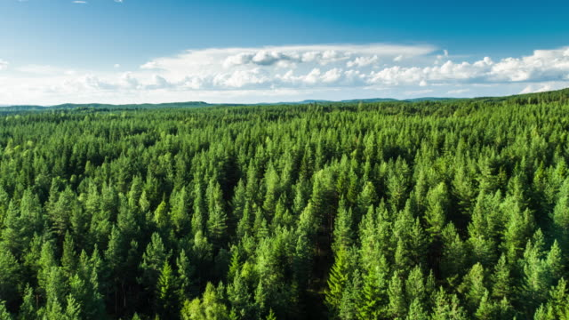 aerial of boreal forest - 4k nature/wildlife/weather - sweden stock videos & royalty-free footage