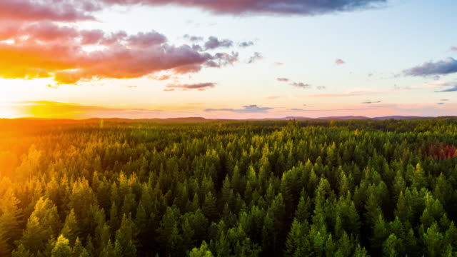 aerial of boreal forest at sunset - 4k nature/wildlife/weather - svezia video stock e b–roll