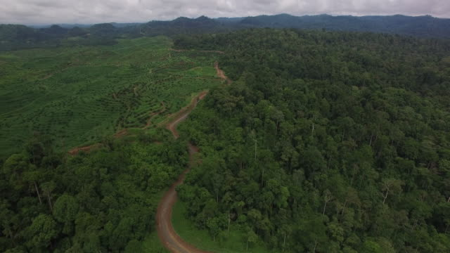 aerial of boundary line between rainforest reserve and palm oil plantation - malaysia stock videos & royalty-free footage