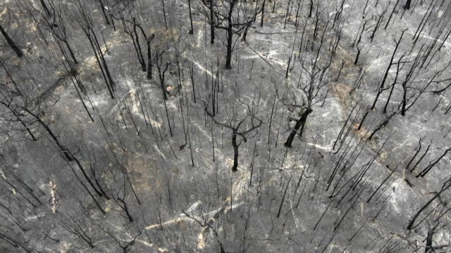 aerial of burnt bush land in tomerong new south wales after wild fires swept through the area - fire natural phenomenon stock videos & royalty-free footage