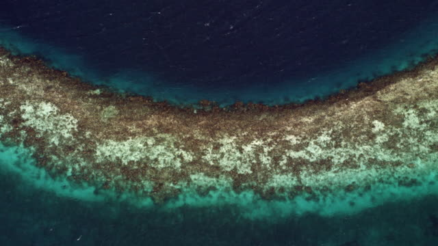 Aerial Of Coral Reef In The Caribbean