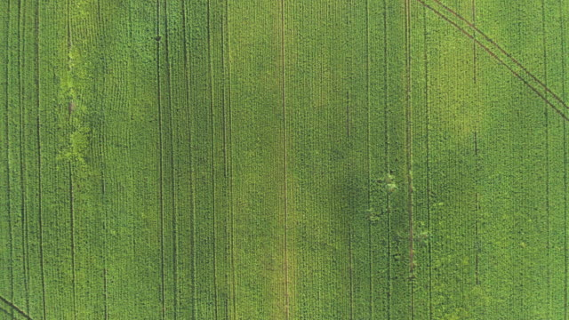aerial of crops in spring - horizontal stock videos & royalty-free footage
