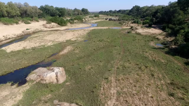 vídeos y material grabado en eventos de stock de aerial of elephant herd feeding in a large riverbed with water in it, with lions further downstream, kruger national park, south africa - reserva natural