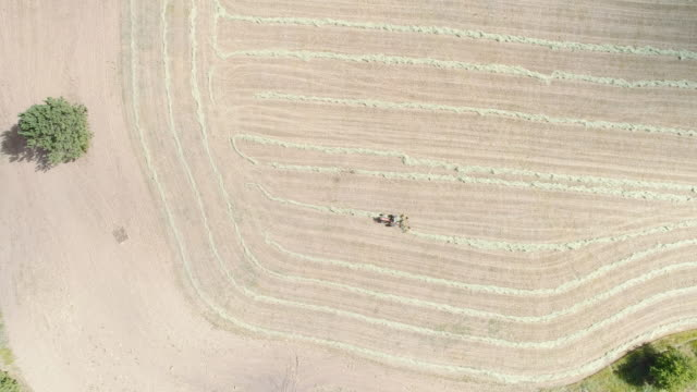 aerial of farmer harvesting - hay stock videos and b-roll footage