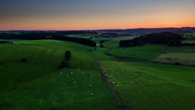 Aerial of fields with cattle in moody twilight, aerial shot
