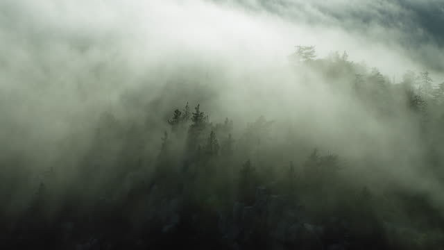 vídeos de stock e filmes b-roll de aerial of fog over forest in california - nevoeiro