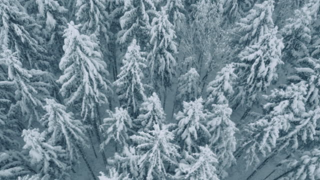 Aerial of forest in winter