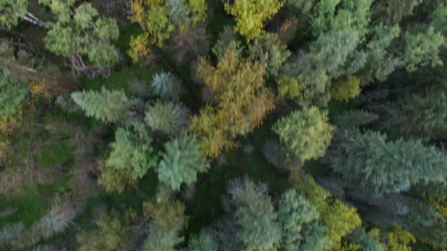 Aerial of Forest