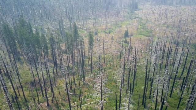 Aerial of Green Pine Trees of Brookings Oregon