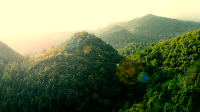 aerial of green sunny forest - valle video stock e b–roll