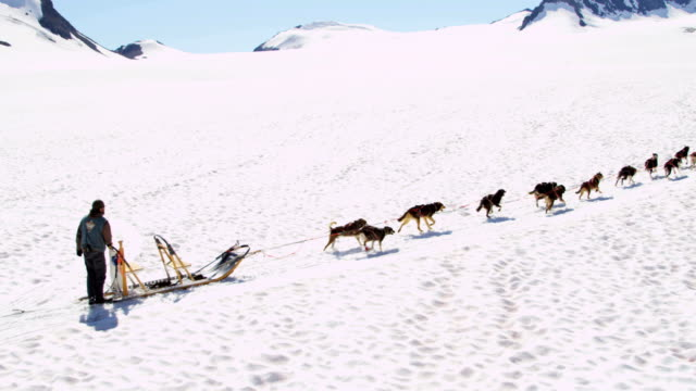 aerial of husky dogsledding alaska, usa - malamute stock videos and b-roll footage