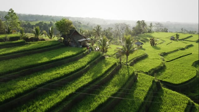stockvideo's en b-roll-footage met aerial of jatiluwih rice terrace bali, indonesia dusk - terras terrein