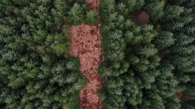 aerial of kielder forest in northumberland, woodland planted on valuable bogs - tree area stock videos & royalty-free footage