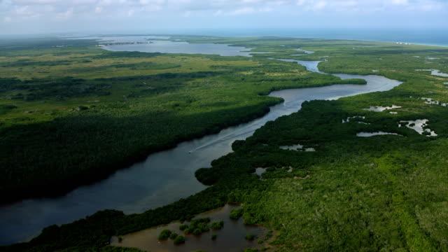 vídeos de stock, filmes e b-roll de aerial of lagartos river in yucatan mexico - yucatán