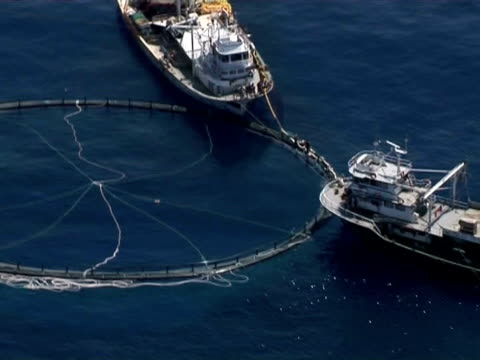 aerial of limassol, cyprus, tuna farm. - peschereccio video stock e b–roll