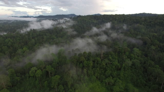 Aerial of misty morning rainforest