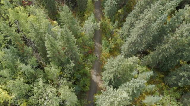 vídeos de stock, filmes e b-roll de aerial of mountain bike team riding through forest - dawson city