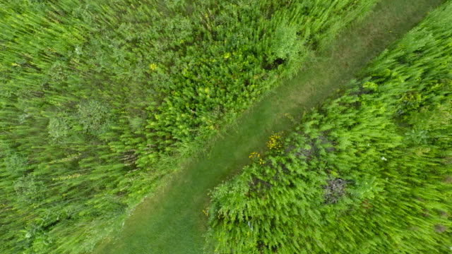 Aerial of Prairie Vegetation w/Grassy Road