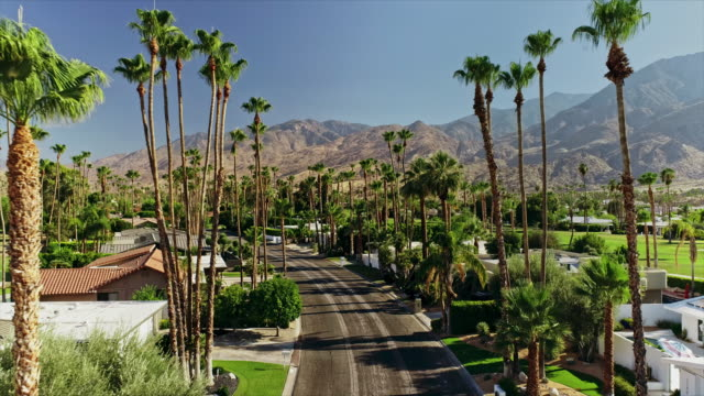 ws aerial of residential street lined by tall palm trees in historic canyon estates neighborhood - 1950 stock videos & royalty-free footage