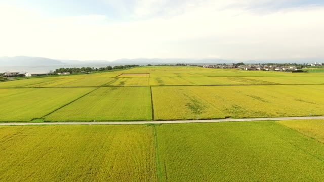 aerial of rice fields - paddy field stock videos & royalty-free footage