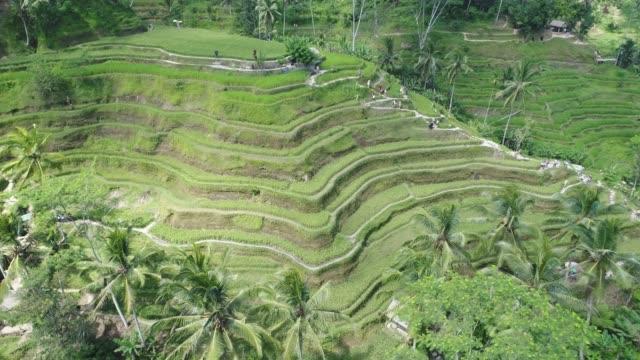 Luftbild der Reisterrassen