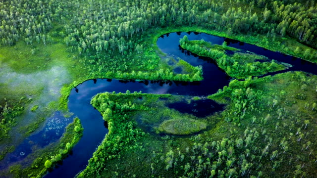 aerial of river meandering through forest - sweden - taiga stock videos and b-roll footage