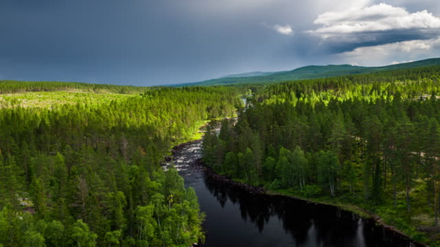 aerial of river surrounded by boreal forest - stream stock videos & royalty-free footage
