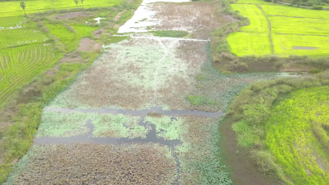 aerial of rural scene landscape over water hyacinth and dry lotus water lily on canal - hyacinth stock videos & royalty-free footage