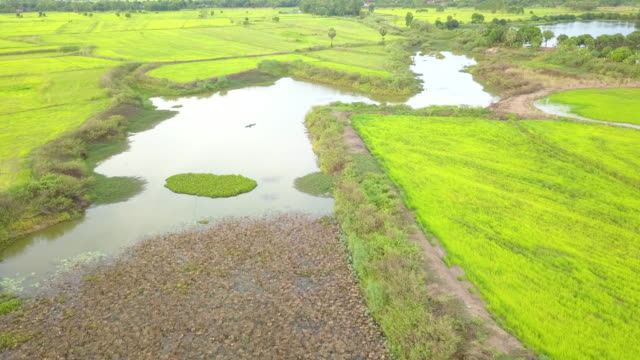 Aerial of rural scene landscape over water hyacinth and lotus water lily on canal