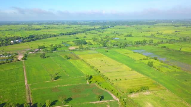 Aerial of rural scene landscape rice field in Thailand