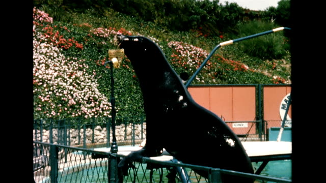 / Aerial of seal arena at Marineland / amphitheater packed with people / whistle blows and seals come out with trainer Art Thomas / crowd smile and...