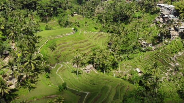 aerial of shadow cast over rice terraces - rice terrace stock videos and b-roll footage