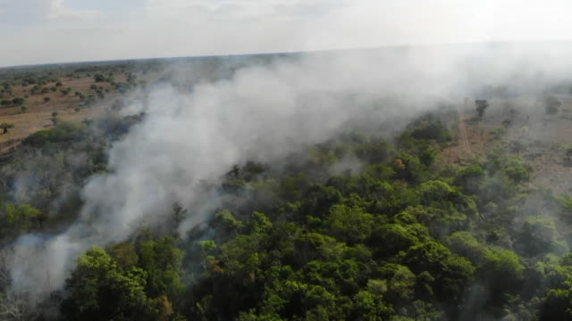aerial of smoke rising from amazon canopy as forest fires burn out of controll - rainforest stock videos & royalty-free footage