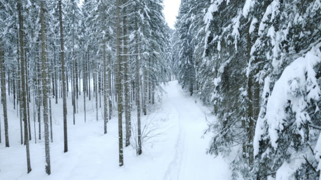 Aerial of snow covered path through the forest