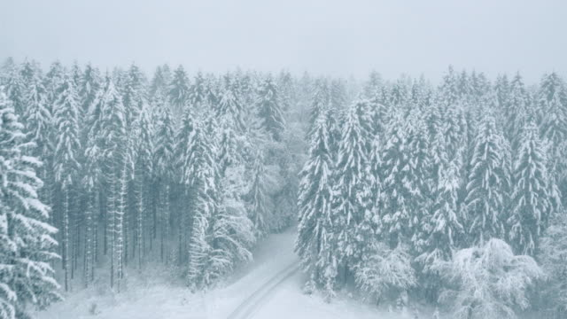 Aerial of snowcapped trees surrounding a white road