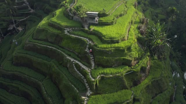 aerial of tegallalang rice fields - ubud stock videos & royalty-free footage